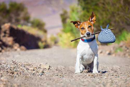 Créditos: Javier Brosch/Shutterstock.com
