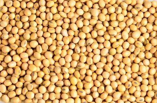 Empresa paranaense é multada por armazenar sementes de soja de forma irregular