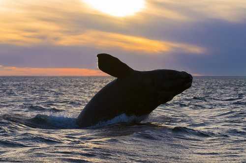 TRF4 mantém turismo embarcado de observação de baleias no litoral catarinense