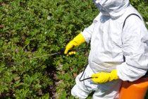 Município é condenado a pagar salários e FGTS de aplicador de herbicida contratado sem concurso público