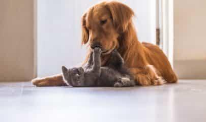 Câmara aprova projeto que proíbe extermínio de cães e gatos por órgãos públicos