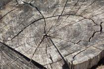 Área de desmatamento na Amazônia Legal deve ser recomposta via indenização por danos materiais