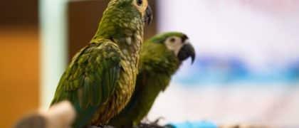 Idosa consegue manter papagaio com o qual convive há 17 anos
