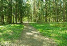reserva florestal