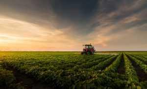 Liminar da Ocesp assegura crédito de ICMS para insumo agropecuário 1