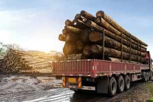 Transporte ilegal de madeira gera apreensão integral da mercadoria   Juristas
