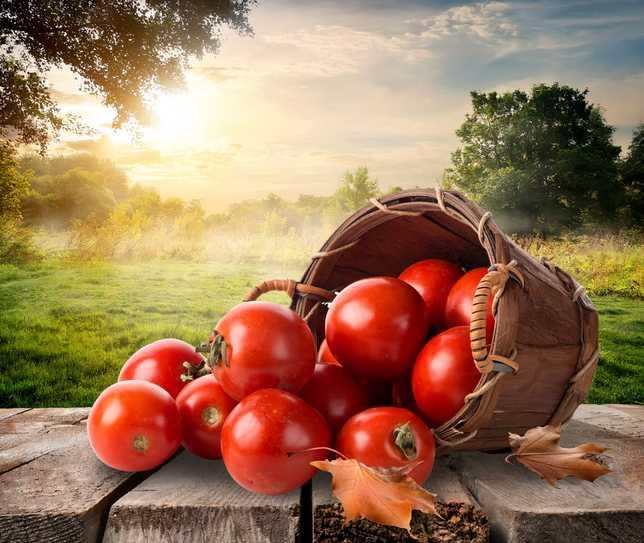 Extrato de tomate com lesma - Indenização - TJSC