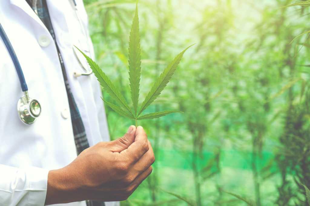 Anvisa adia votação sobre plantio de maconha medicinal   Juristas